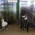 Организация экскурсии Виаполь Экскурсия «Белая Русь: Минск – Бобруйск 6 дней» - фото 11