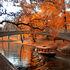 Туристическое агентство Сэвэн Трэвел Латвийские замки в туре выходного дня Рига-Цесис-Сигулда - фото 5