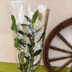 Магазин цветов Прекрасная садовница Дендробиум