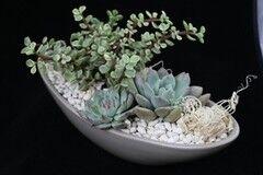 Магазин цветов Stone Rose Лодка из керамики с суккулентами