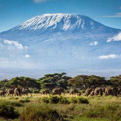 Туристическое агентство VIP TOURS Танзания , вылет из Киева Hiliki House (Stone Town)3*