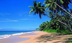 Туристическое агентство VIP TOURS Индия из Москвы  Royal Mirage Beach Resort 3*