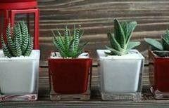 Магазин цветов Stone Rose Суккуленты в стеклянных кубических вазах