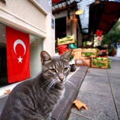 Туристическое агентство География Пляжный авиатур в Турцию, Кушадасы, Hotel Grand Efe 4*