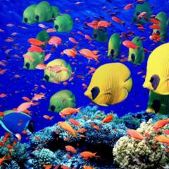 Туристическое агентство TravelHouse Пляжный aвиатур в Египет, Хургада, King Tut Aqua Park Beach Resort 4*