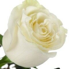 Магазин цветов Долина цветов Роза Мондиаль