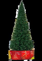 Елка и украшение GreenTrees Уличная ель «Альпийская», 8м