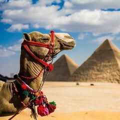 Туристическое агентство География Пляжный тур в Египет, Шарм-эль-Шейх, Royal Albatros Moderna