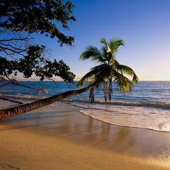 Туристическое агентство EcoTravel Пляжный авиатур в Индию, Гоа, White Pearl Guest House 2*