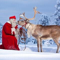 Туристическое агентство Боншанс Комбинированный тур «Новый год в Лапландии»