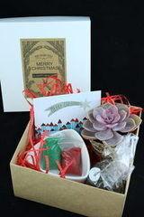 Магазин цветов Stone Rose Набор новогодний для посадки суккулента