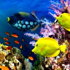 Горящий тур География Пляжный тур в Египет, Шарм-эль-Шейх, Tropitel Naama Bay 5