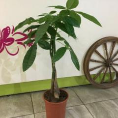 Магазин цветов Прекрасная садовница Пахира