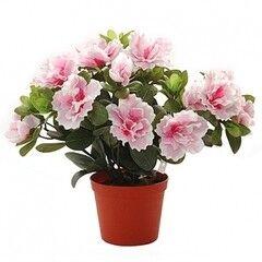 Магазин цветов Планета цветов Азалия