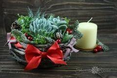 Магазин цветов Stone Rose Деревянная миска с суккулентами Редуайлд Рат