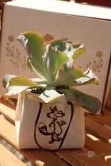 Магазин цветов Stone Rose Эхеверия в керамическом мешочке