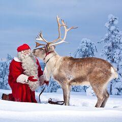 Туристическое агентство Респектор трэвел Экскурсионный тур автобус+паром «Новый год в Лапландии»
