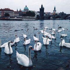 Туристическое агентство Отдых и Туризм Автобусный тур «Чешский романс»- 5 дней путешествия и полных 3 дня в чудесной Праге
