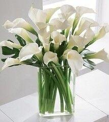 Магазин цветов Cvetok.by Букет «Белоснежный»