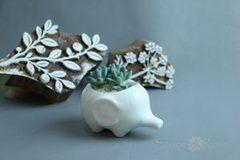 Магазин цветов Stone Rose Белый слоник с суккулентами