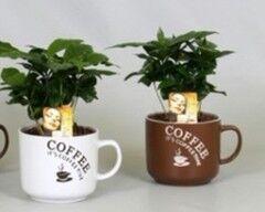 Магазин цветов Cvetok.by Кофе (Coffea in koffiemok)
