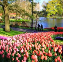 Туристическое агентство ДЛ-Навигатор Автобусный тур «Вся Голландия и День Короля»