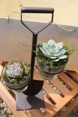 Магазин цветов Stone Rose Лопатка с суккулентами