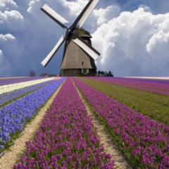 Туристическое агентство ДЛ-Навигатор Автобусный экскурсионный тур «В королевстве цветов»