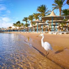 Горящий тур Голд Фокс Трэвел Пляжный авиатур в Египет, Шарм-Эль-Шейх, Coral Beach Resort Tiran 4*