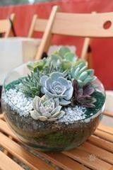 Магазин цветов Stone Rose Стеклянный террариум