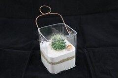 Магазин цветов Stone Rose Кактус в стекле