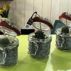 Магазин цветов Прекрасная садовница Кактус в стеклянной банке