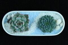 Магазин цветов Stone Rose Морская композиция в белой керамической лодочке