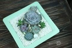 Магазин цветов Stone Rose Суккуленты в мятной тарелке