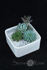 Магазин цветов Stone Rose Суккуленты в белом керамическом кашпо