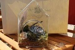 Магазин цветов Stone Rose Стеклянный домик