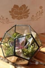 Магазин цветов Stone Rose Флорариум «Глоб»