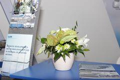 Магазин цветов Lia Букет из живых цветов в горшке белый
