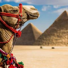Горящий тур Голд Фокс Трэвел Пляжный авиатур в Египет, Шарм-Эль-Шейх, Panorama Naama Heights 4*