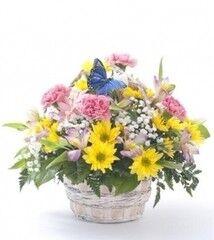 Магазин цветов Cvetok.by Цветочная корзина «Весна на пороге»