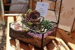 Магазин цветов Stone Rose Флорариум «Прямоугольный сундук»