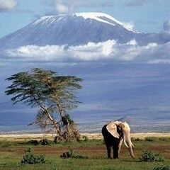 Туристическое агентство InnTourLab Авиатур в Танзанию «Восхождение на Килиманджаро по Умбве»