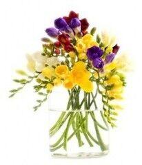 Магазин цветов Фурор Фрезия