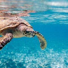 Туристическое агентство EcoTravel Пляжный авиатур на Сейшелы, La Residence 3